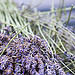 Cooking with Fresh Lavender